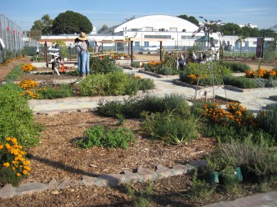 The beautiful educational food garden at Carver Middle School in South Central LA. October 2010.